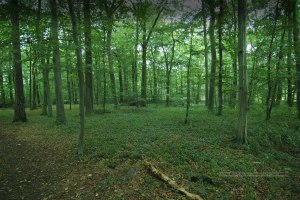 teutoberg_forest_trees_1200x